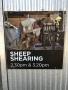 Sheep Shearing Sign