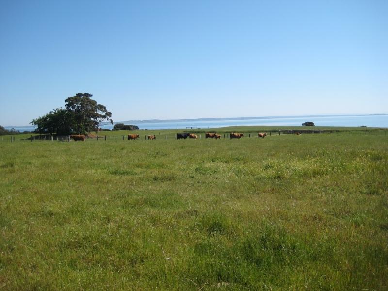 Churchill Island Scenery