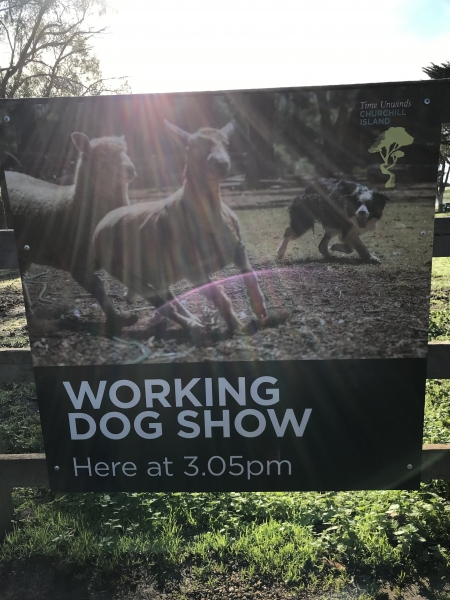 Working Dog Show Sign